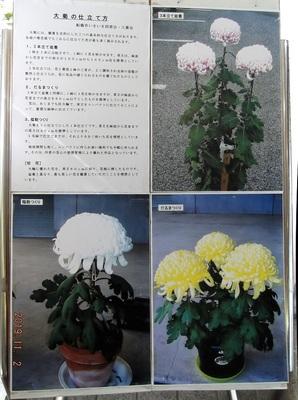 DSCF372401.jpg