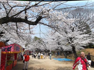 千葉公園 00401.jpg