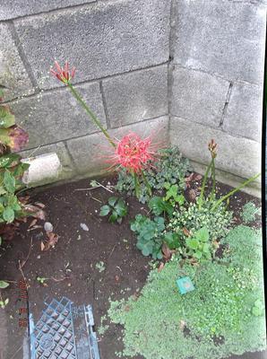 庭の花 00101.jpg