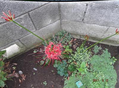 庭の花 00701.jpg