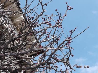 春の兆し 00601.jpg
