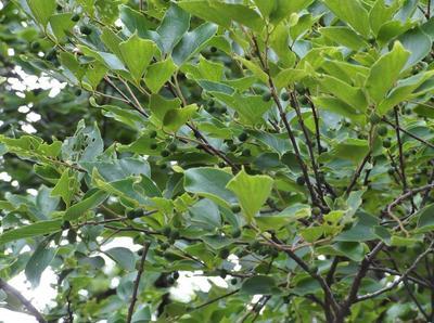 春自然ウオーク 01001.jpg