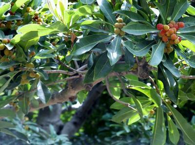 春自然ウオーク 01201.jpg