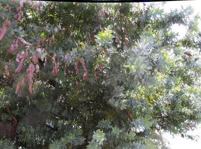 春自然ウオーク 02401.jpg