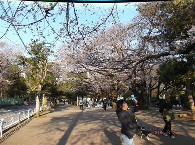 桜3 00901.jpg