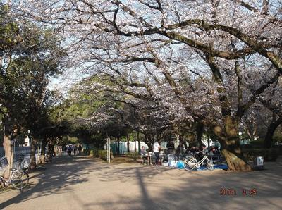 桜3 01201.jpg